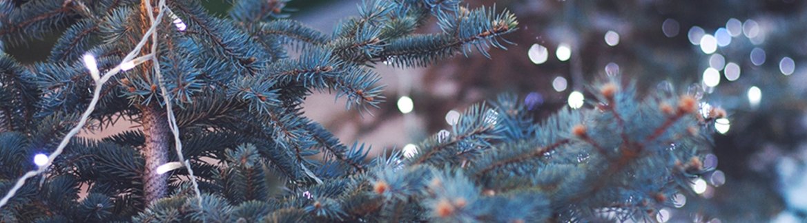 Where to Buy Real Christmas Trees With These 3 Tips | Walddie